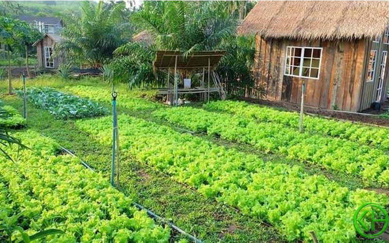 Đất vườn